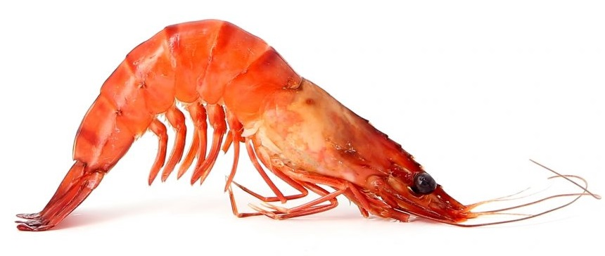 ml seafood grossiste crevettes nice